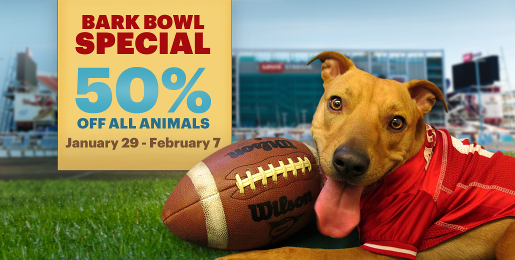 SVACA's Bark Bowl Adoption Special