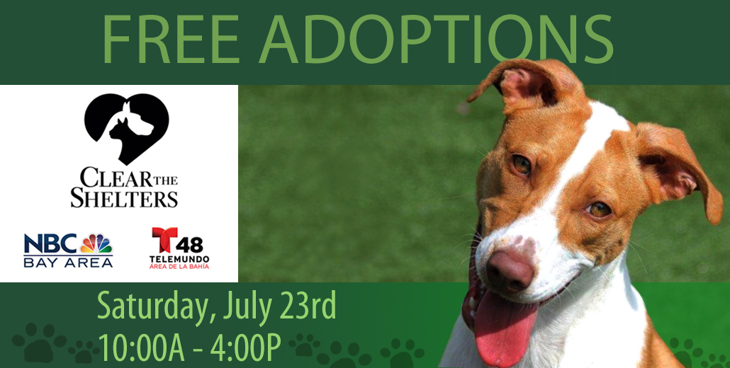 Free Adoptions at Clear the Shelter!