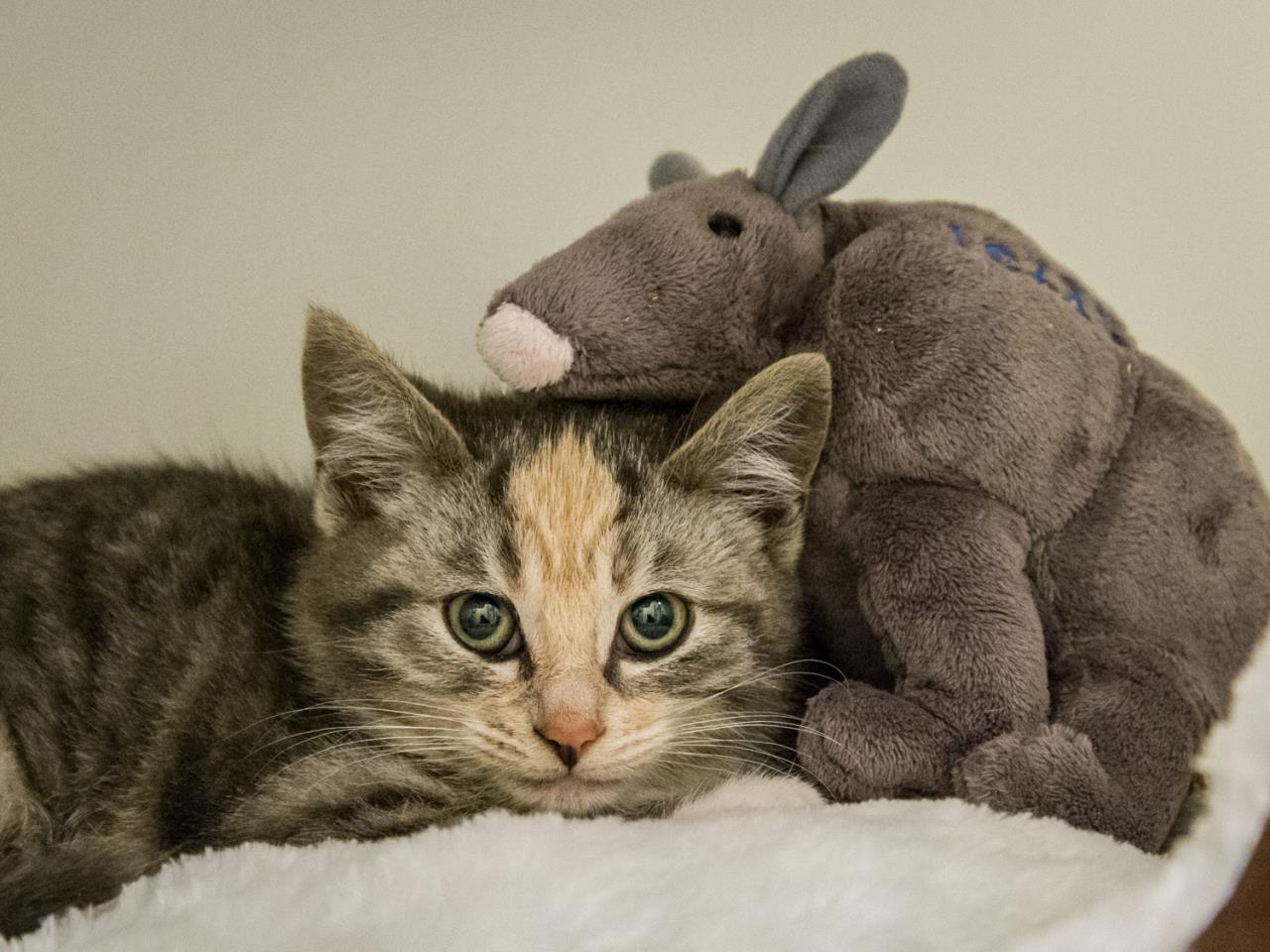 Trinity Kitten and her Armadillo - SVACA 180131