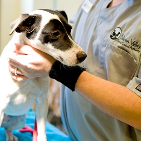 Services: Spay and Neuter